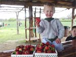Pick your own fresh, sweet strawberries at Sweetberry Farm in Mable Falls